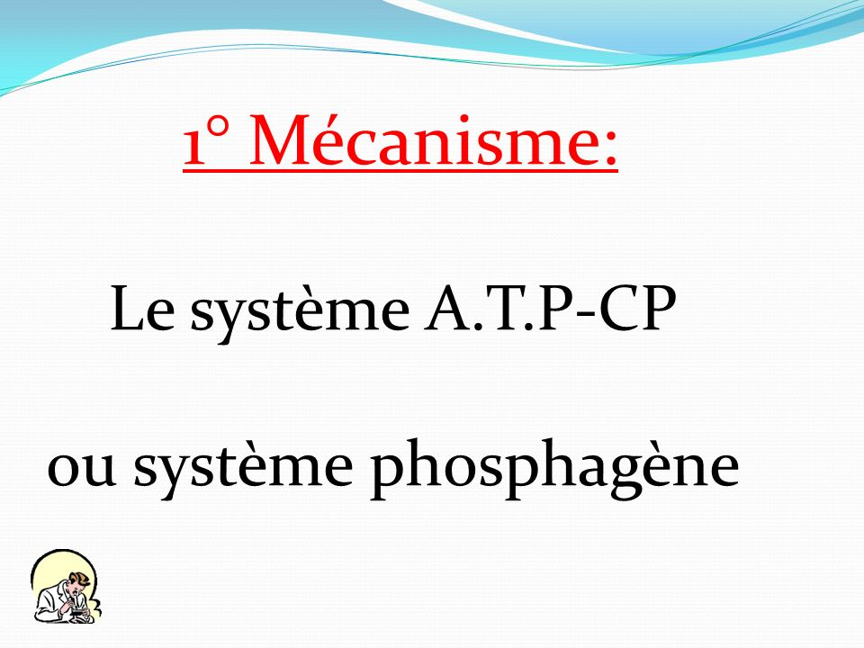 1° Mécanisme: Le système A.T.P-CP ou système phosphagène