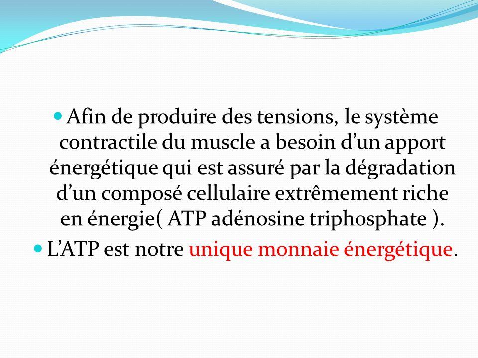 Afin de produire des tensions, le système contractile du muscle a besoin dun apport énergétique qui est assuré par la dégradation dun composé cellulai