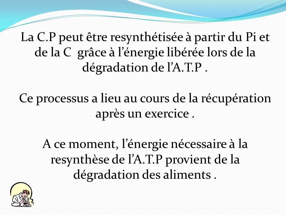 La C.P peut être resynthétisée à partir du Pi et de la C grâce à lénergie libérée lors de la dégradation de lA.T.P. Ce processus a lieu au cours de la