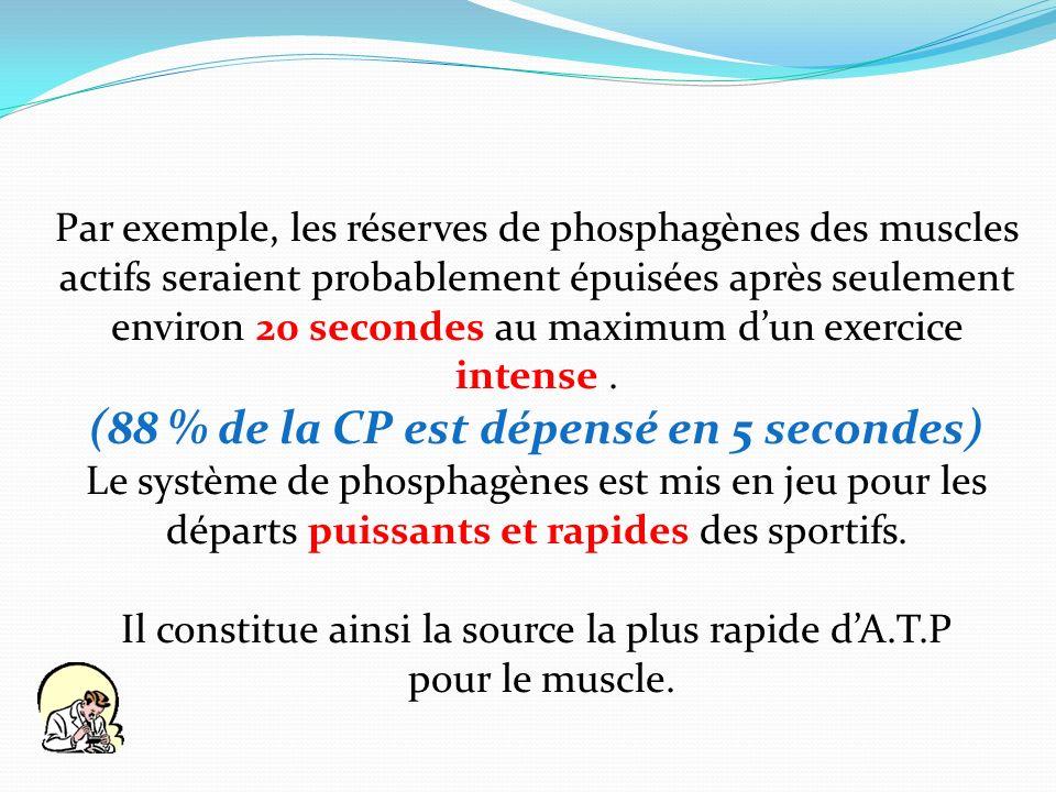 Par exemple, les réserves de phosphagènes des muscles actifs seraient probablement épuisées après seulement environ 20 secondes au maximum dun exercic