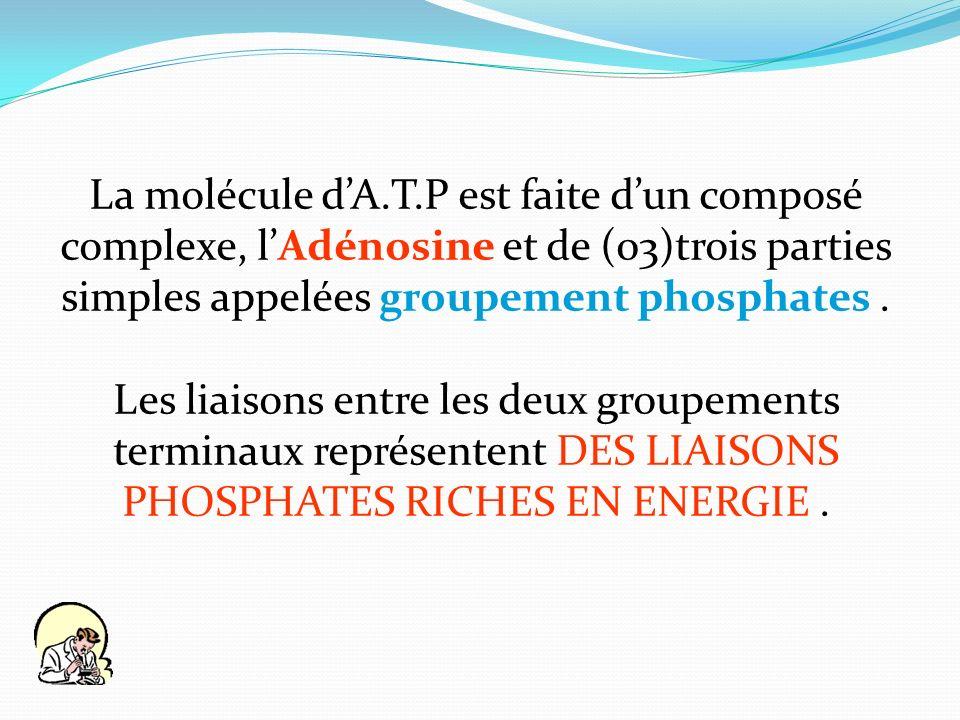 La molécule dA.T.P est faite dun composé complexe, lAdénosine et de (03)trois parties simples appelées groupement phosphates. Les liaisons entre les d