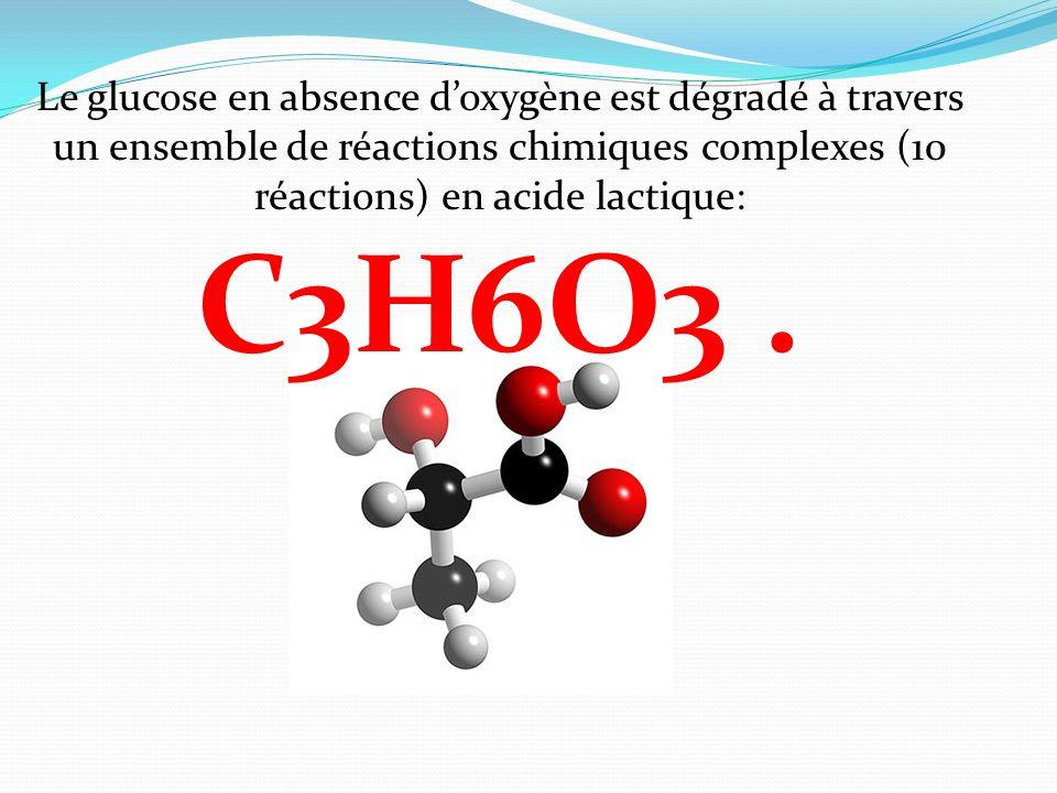 Le glucose en absence doxygène est dégradé à travers un ensemble de réactions chimiques complexes (10 réactions) en acide lactique: C3H6O3.