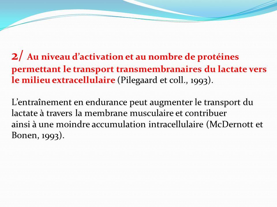 2/ Au niveau dactivation et au nombre de protéines permettant le transport transmembranaires du lactate vers le milieu extracellulaire (Pilegaard et c
