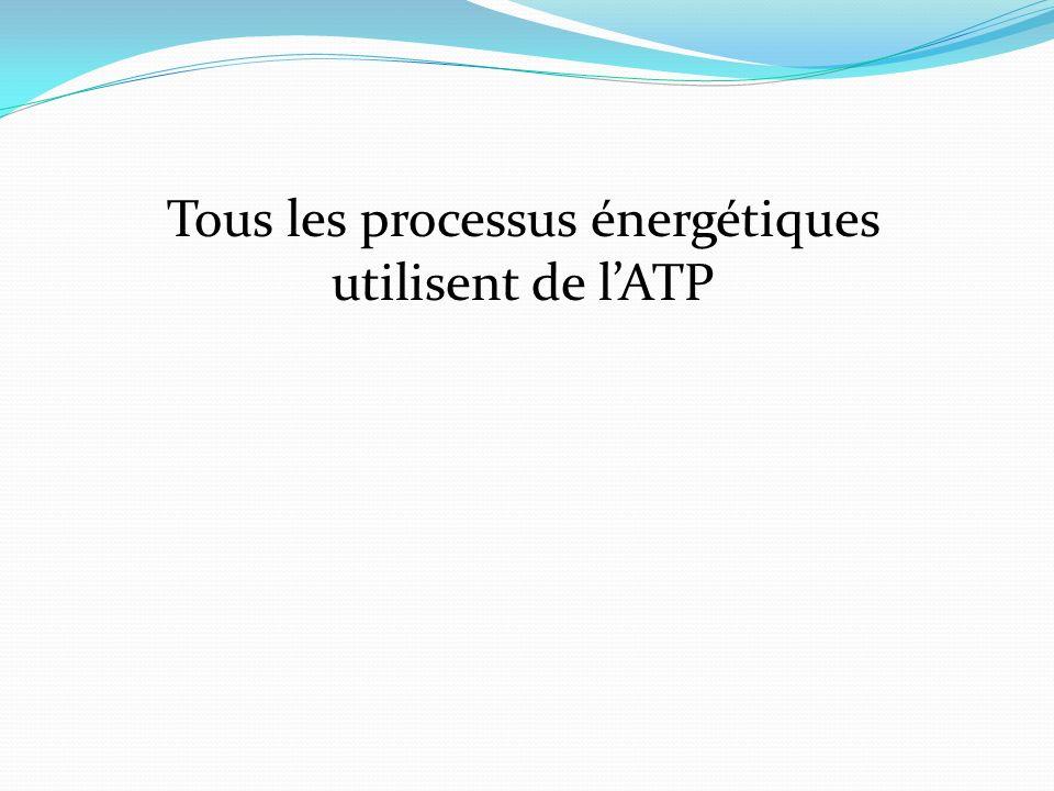 Tous les processus énergétiques utilisent de lATP