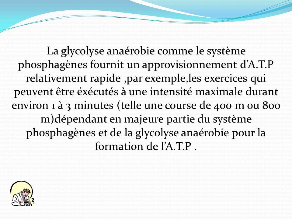 La glycolyse anaérobie comme le système phosphagènes fournit un approvisionnement dA.T.P relativement rapide,par exemple,les exercices qui peuvent êtr