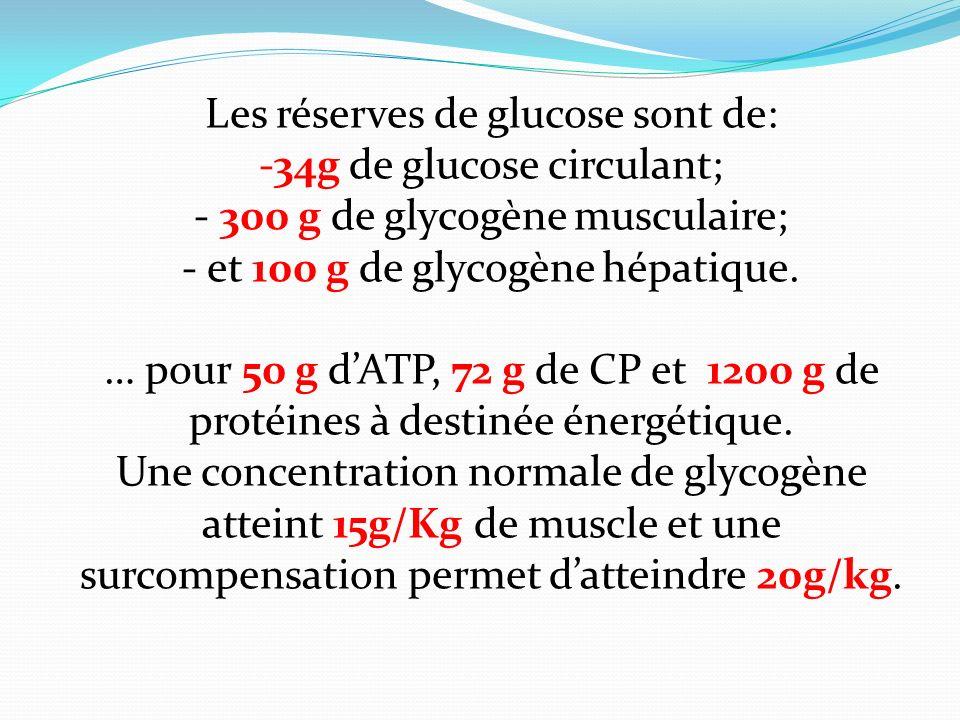Les réserves de glucose sont de: -34g de glucose circulant; - 300 g de glycogène musculaire; - et 100 g de glycogène hépatique. … pour 50 g dATP, 72 g