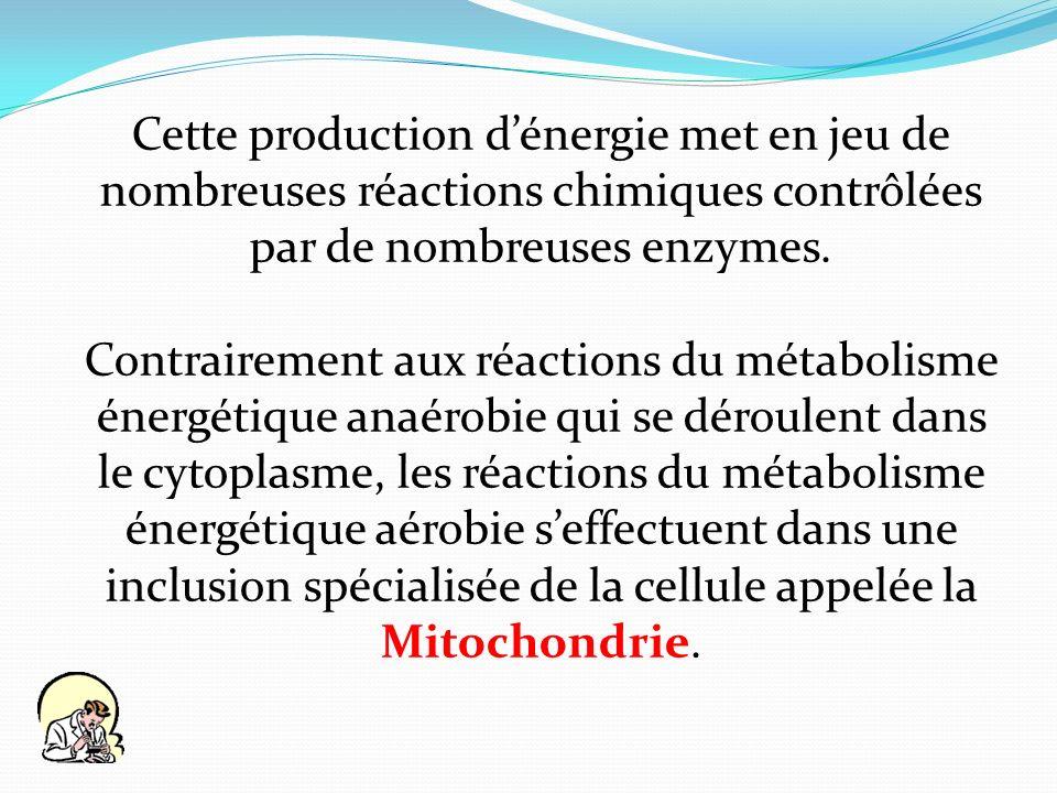 Cette production dénergie met en jeu de nombreuses réactions chimiques contrôlées par de nombreuses enzymes. Contrairement aux réactions du métabolism