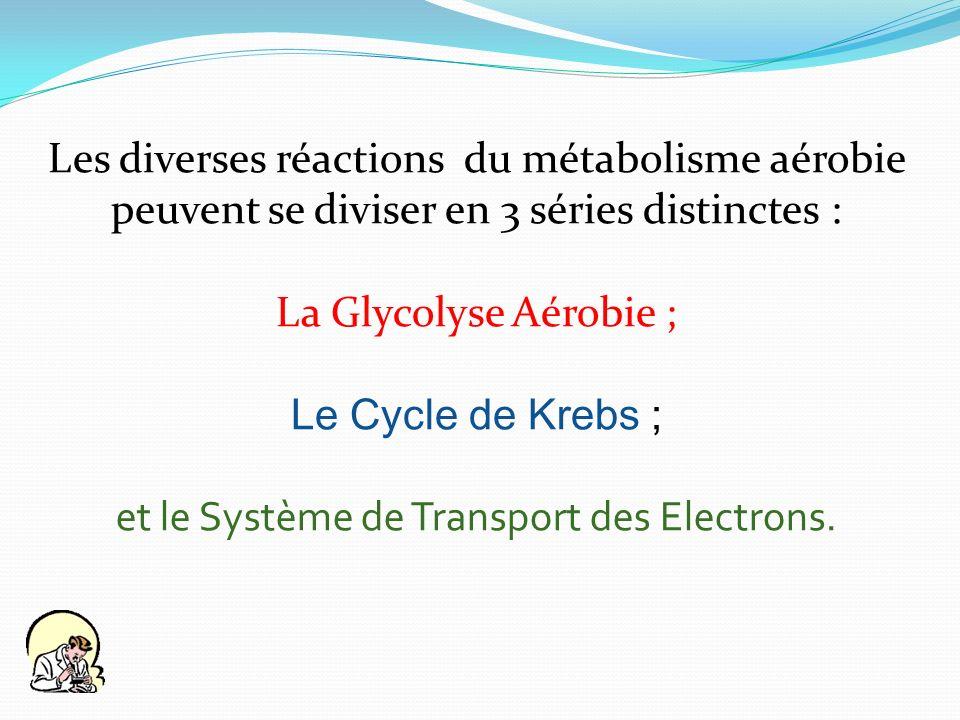 Les diverses réactions du métabolisme aérobie peuvent se diviser en 3 séries distinctes : La Glycolyse Aérobie ; Le Cycle de Krebs ; et le Système de