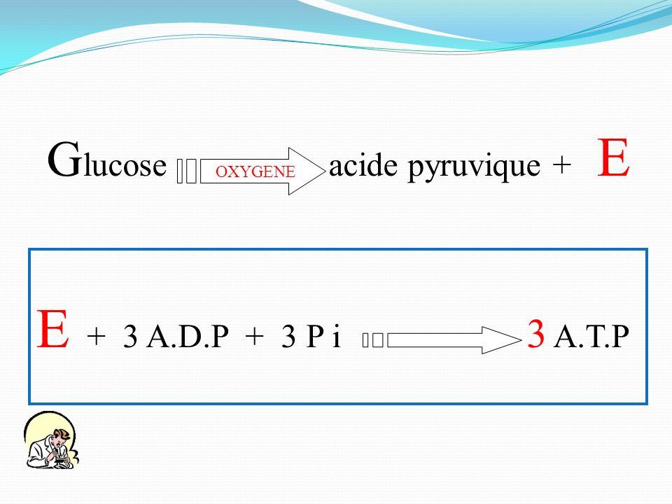E + 3 A.D.P + 3 P i 3 A.T.P G lucose acide pyruvique + E OXYGENE