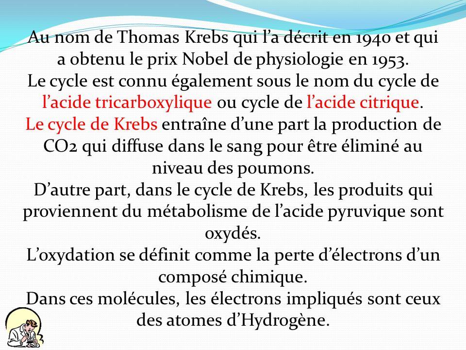 Au nom de Thomas Krebs qui la décrit en 1940 et qui a obtenu le prix Nobel de physiologie en 1953. Le cycle est connu également sous le nom du cycle d