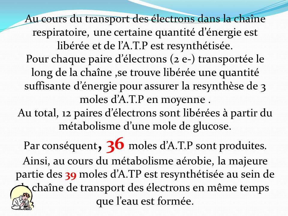 Au cours du transport des électrons dans la chaîne respiratoire, une certaine quantité dénergie est libérée et de lA.T.P est resynthétisée. Pour chaqu