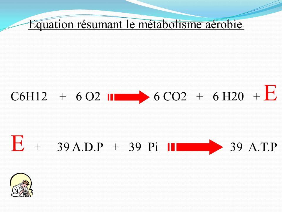 E + 39 A.D.P + 39 Pi 39 A.T.P C6H12 + 6 O2 6 CO2 + 6 H20 + E Equation résumant le métabolisme aérobie :