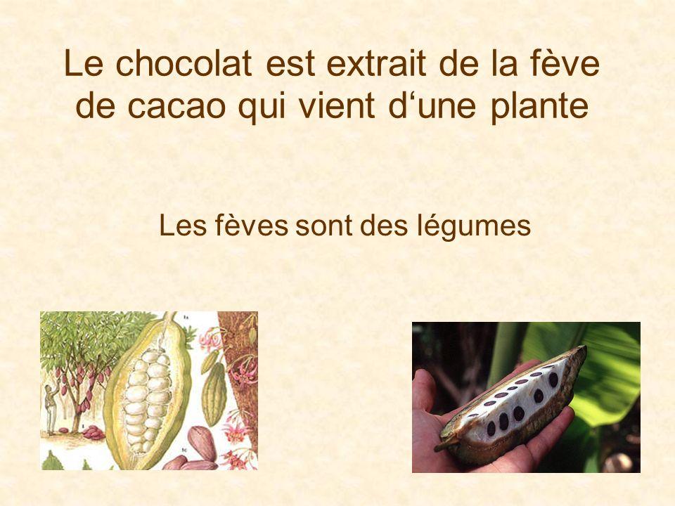 Le chocolat est extrait de la fève de cacao qui vient dune plante Les fèves sont des légumes