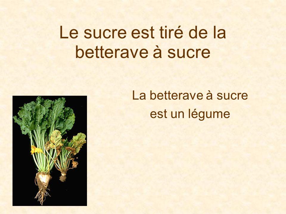 Le sucre est tiré de la betterave à sucre La betterave à sucre est un légume
