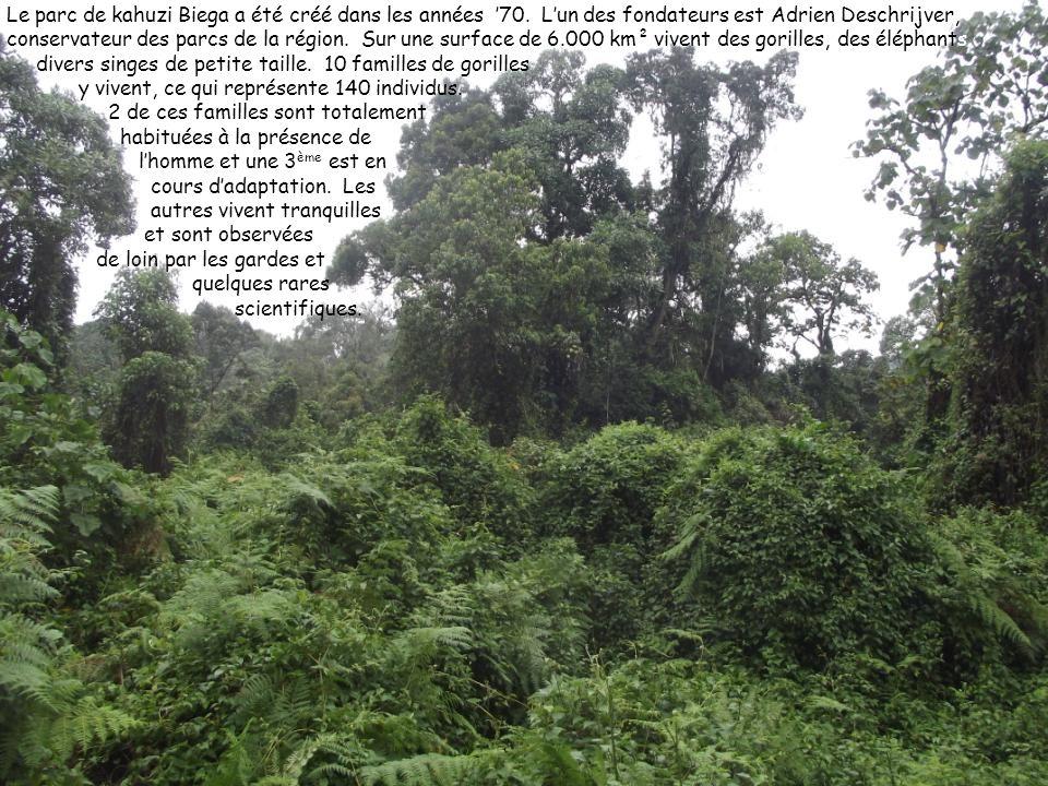 Le parc de kahuzi Biega a été créé dans les années 70. Lun des fondateurs est Adrien Deschrijver, conservateur des parcs de la région. Sur une surface