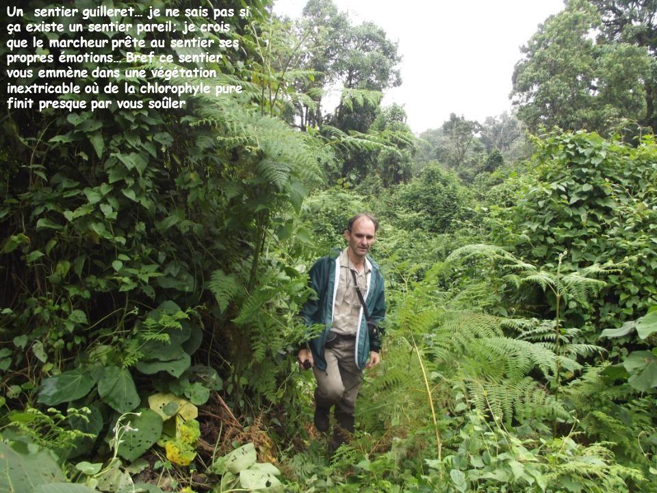 Après 40 minutes de marche, le guide qui maccompagne mindique un nid aérien … (expression utilisée par lui); on aurait presque envie de répondre: « où veutukiswagromalin »