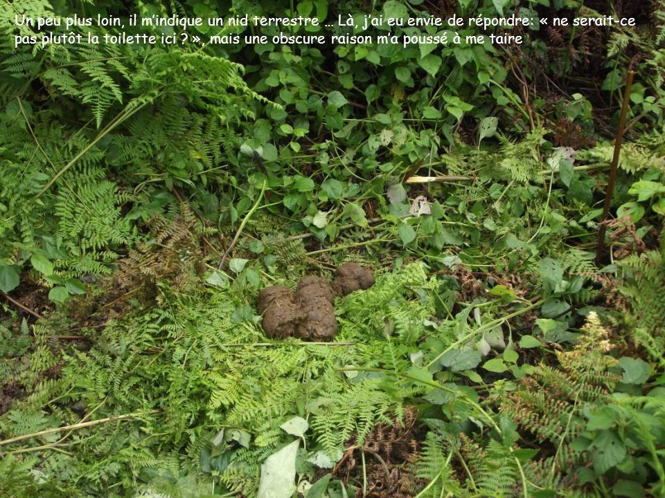 Un peu plus loin, il mindique un nid terrestre … Là, jai eu envie de répondre: « ne serait-ce pas plutôt la toilette ici ? », mais une obscure raison