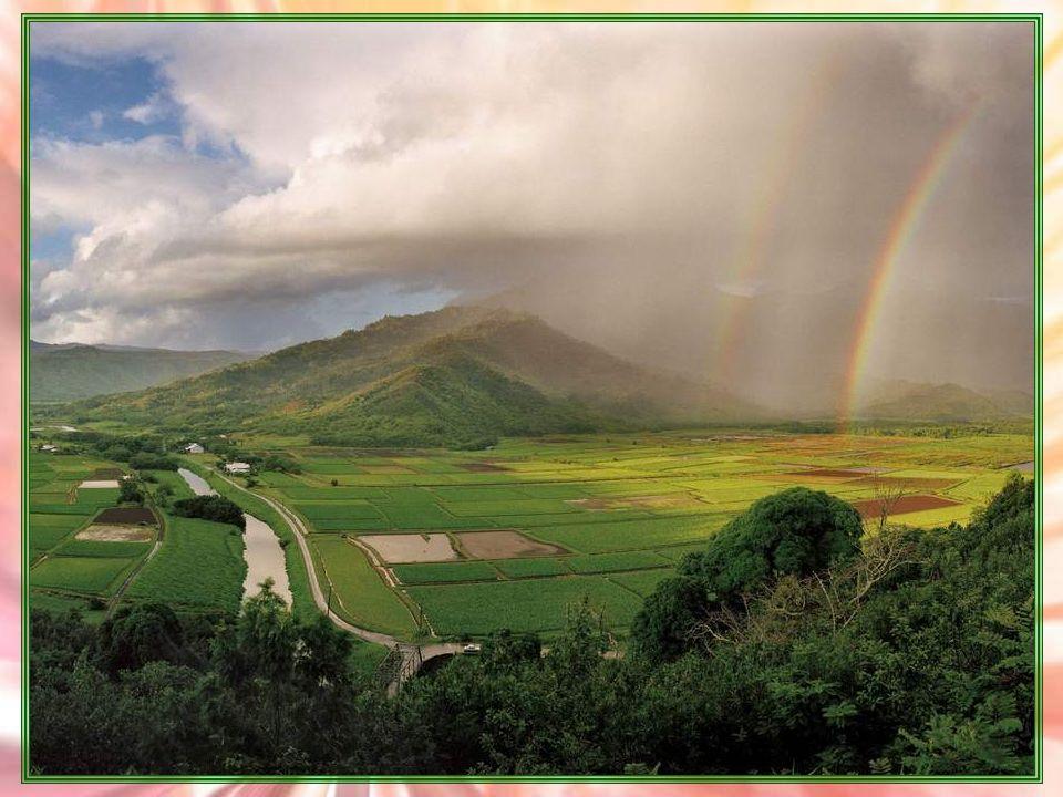 Rêves Je rêve dun monde bien sage ; Dune verdure éternelle, défiant soleil et nuage. Je rêve de fêter le printemps, sur les balcons et trottoirs, les