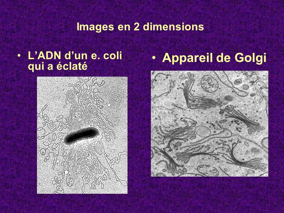 Images en 2 dimensions LADN dun e. coli qui a éclaté Appareil de Golgi