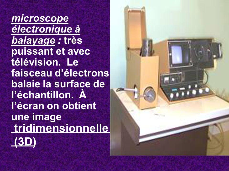 microscope électronique à balayage : très puissant et avec télévision. Le faisceau délectrons balaie la surface de léchantillon. À lécran on obtient u