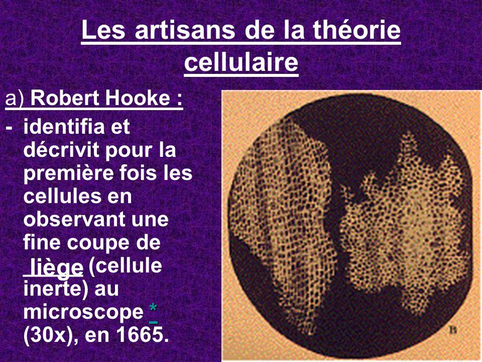 Les artisans de la théorie cellulaire a) Robert Hooke : * * -identifia et décrivit pour la première fois les cellules en observant une fine coupe de _