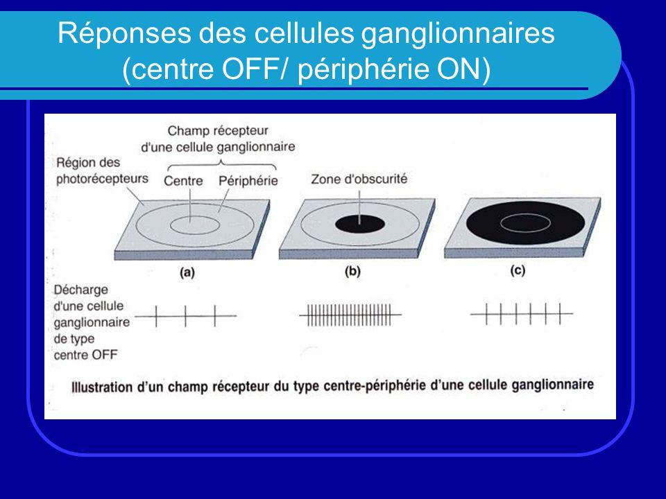 Réponses des cellules ganglionnaires (centre OFF/ périphérie ON)