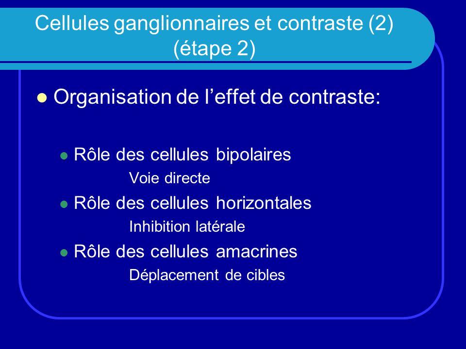 Cellules ganglionnaires et contraste (2) (étape 2) Organisation de leffet de contraste: Rôle des cellules bipolaires Voie directe Rôle des cellules ho
