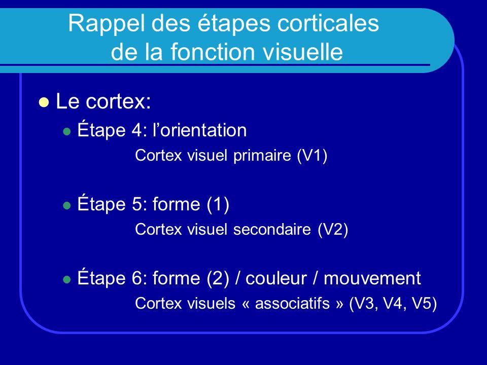 Rappel des étapes corticales de la fonction visuelle Le cortex: Étape 4: lorientation Cortex visuel primaire (V1) Étape 5: forme (1) Cortex visuel sec