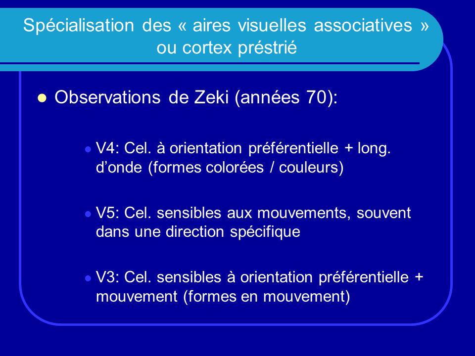 Spécialisation des « aires visuelles associatives » ou cortex préstrié Observations de Zeki (années 70): V4: Cel. à orientation préférentielle + long.