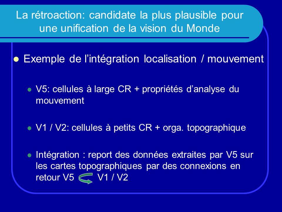 La rétroaction: candidate la plus plausible pour une unification de la vision du Monde Exemple de lintégration localisation / mouvement V5: cellules à