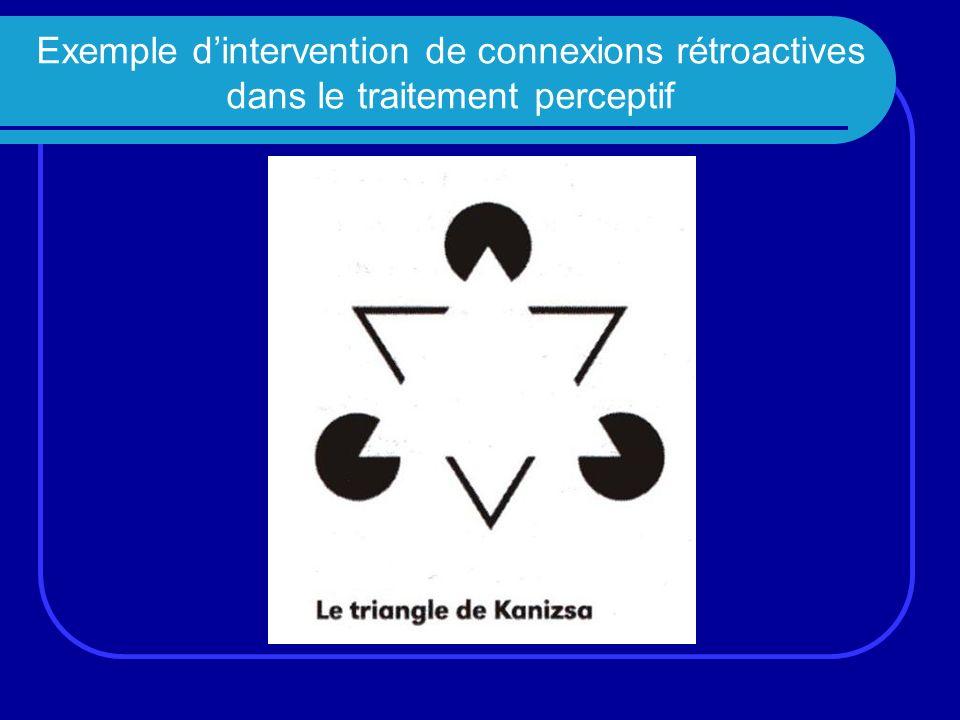 Exemple dintervention de connexions rétroactives dans le traitement perceptif