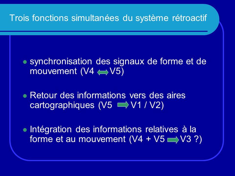 Trois fonctions simultanées du système rétroactif synchronisation des signaux de forme et de mouvement (V4 V5) Retour des informations vers des aires