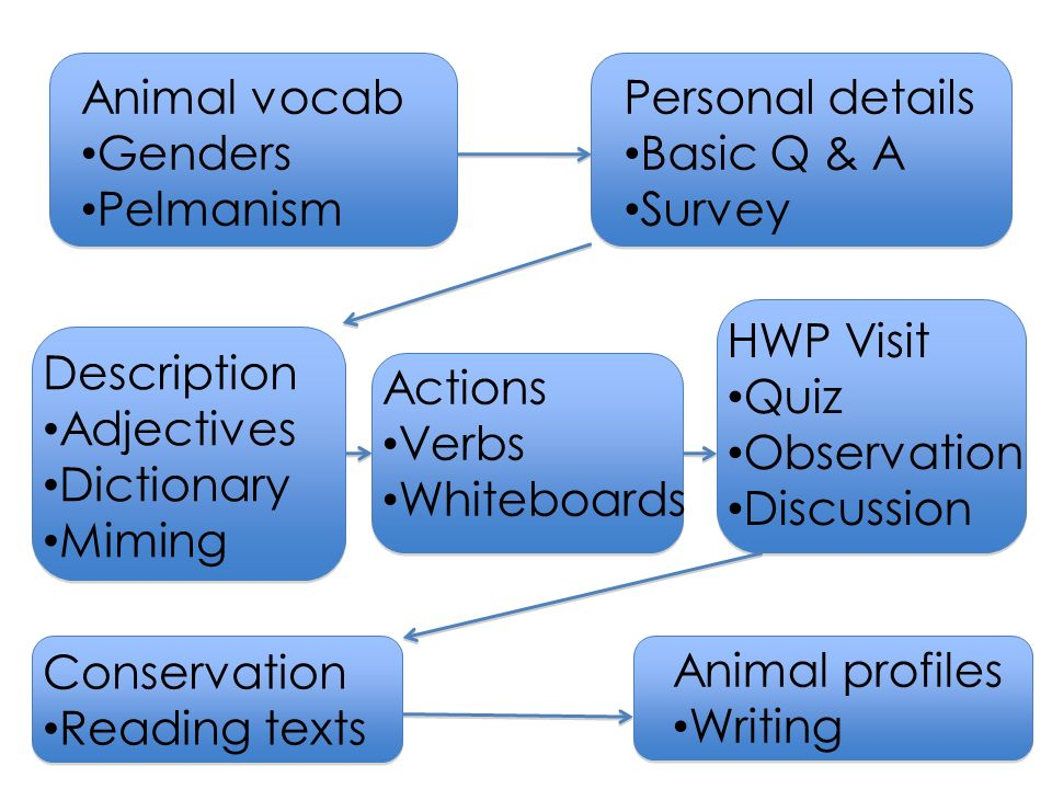 Description Adjectives Dictionary Miming Personal details Basic Q & A Survey Actions Verbs Whiteboards Animal vocab Genders Pelmanism HWP Visit Quiz Observation Discussion Conservation Reading texts Animal profiles Writing