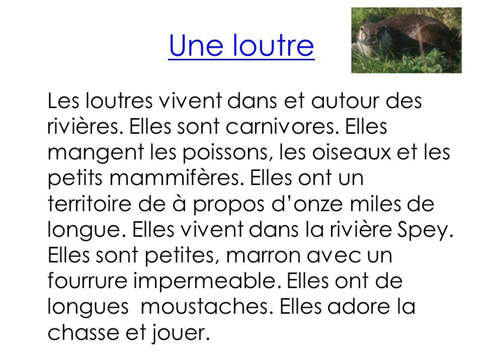 Une loutre Les loutres vivent dans et autour des rivières.