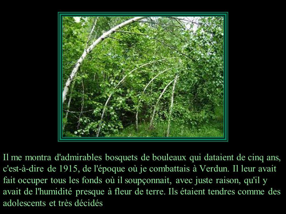 Les chênes étaient drus et avaient dépassé l'âge où ils étaient à la merci des rongeurs; quant aux desseins de la Providence elle-même, pour détruire