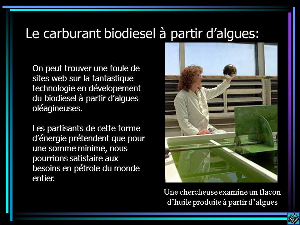 Le carburant biodiesel à partir dalgues: On peut trouver une foule de sites web sur la fantastique technologie en dévelopement du biodiesel à partir dalgues oléagineuses.