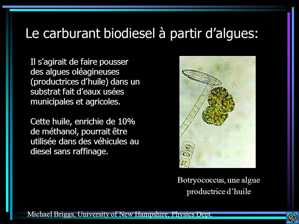 Le carburant biodiesel à partir dalgues: Il sagirait de faire pousser des algues oléagineuses (productrices dhuile) dans un substrat fait deaux usées municipales et agricoles.