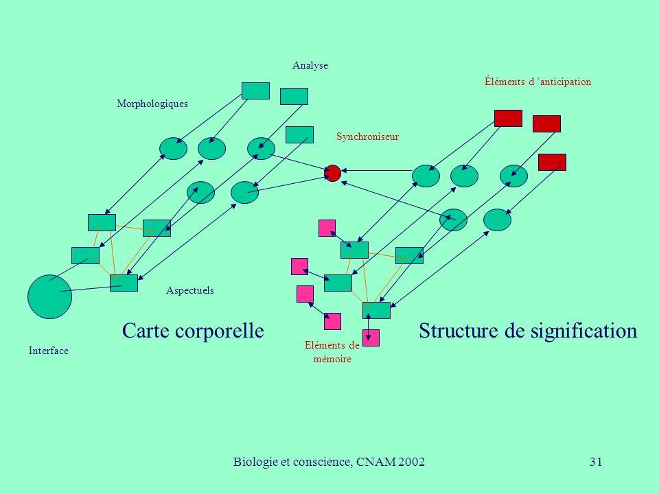 Biologie et conscience, CNAM 200231 Interface Aspectuels Morphologiques Analyse Carte corporelleStructure de signification Éléments d anticipation Syn