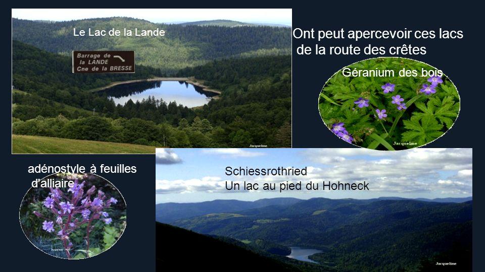 La Vallée des Lacs, composée des trois lacs que sont Gérardmer, Longemer et Retournemer, est un héritage direct des périodes glaciaires du Quaternaire