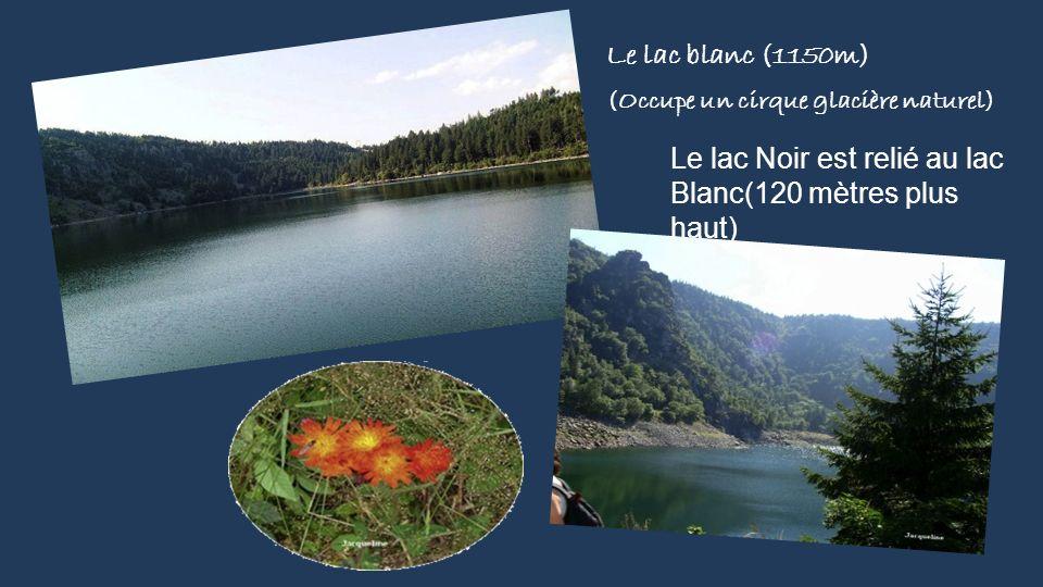 Le Lac de la Lande Ont peut apercevoir ces lacs de la route des crêtes Schiessrothried Un lac au pied du Hohneck adénostyle à feuilles d'alliaire Géra