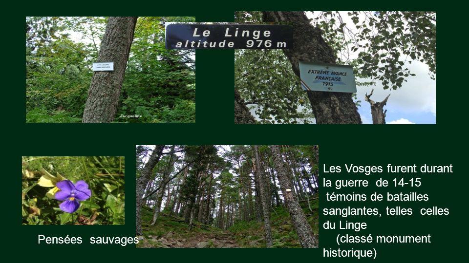 Vue de lEperon fortifié français de Glasborn (guerre 1914-1918) Je désire reposer … en face de cette ligne bleue des Vosges d'où monte jusquà mon coeu