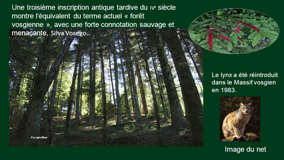 Doù provient la dénomination Vosges ? On le trouve depuis l'Antiquité, la première : Ex monte Vosego désignée une montagne entre Gaule celtique et Bel