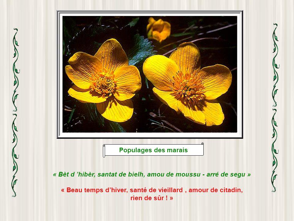 Digitale pourpre « Arrecoumanda-s à Nouste-Dame de Camalès » « Se recommander à Notre-Dame de Camalès » (mot intraduisible, mais vous comprendrez lexp