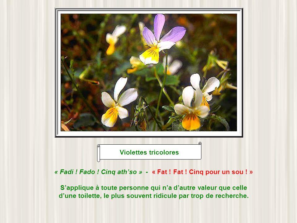 Fritillaire des Pyrénées « Ha lou limasourd » « Faire la limace sourde » Un des plus vieux proverbes béarnais attestés, puisquon trouve sa trace dès 1