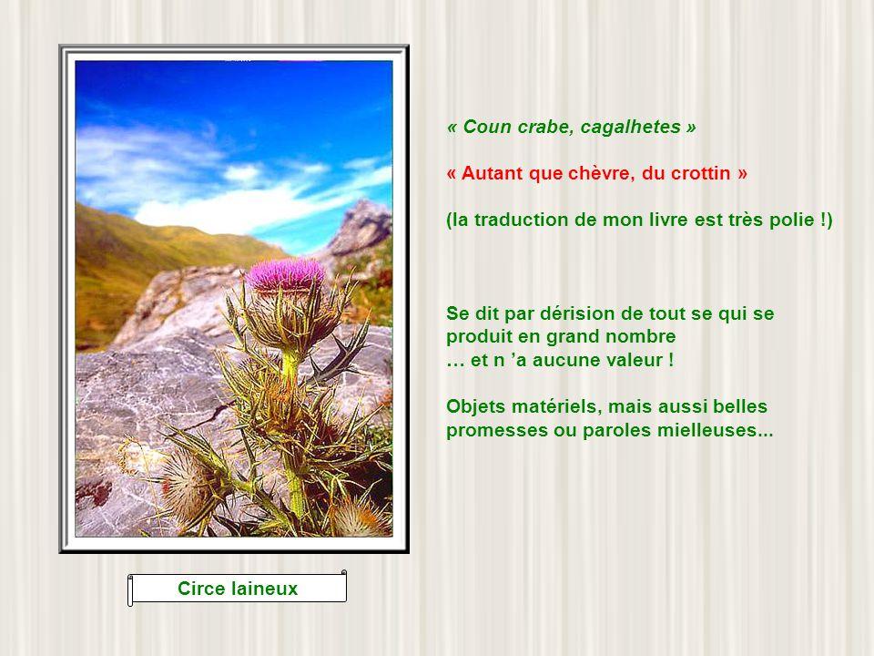 Fritillaire des Pyrénées « Ha lou limasourd » « Faire la limace sourde » Un des plus vieux proverbes béarnais attestés, puisquon trouve sa trace dès 1200 .
