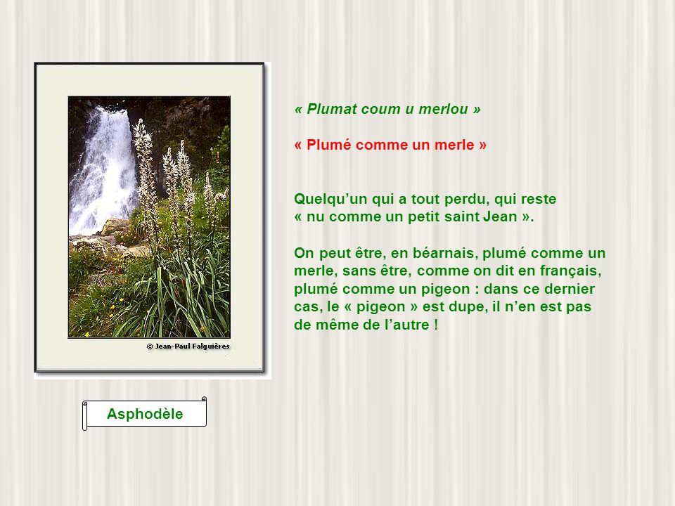 Lis des Alpes « Hoec de palhe pot ahoega la maysou » « Feu de paille peut mettre en feu la maison » En français : petites causes, grands effets.