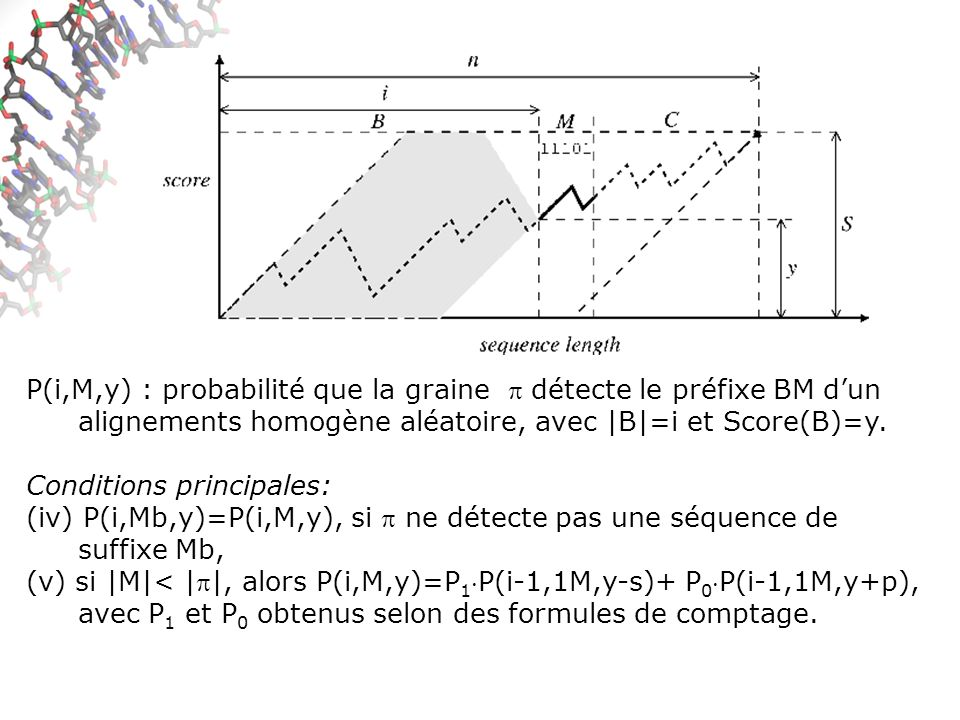 P(i,M,y) : probabilité que la graine détecte le préfixe BM dun alignements homogène aléatoire, avec |B|=i et Score(B)=y.
