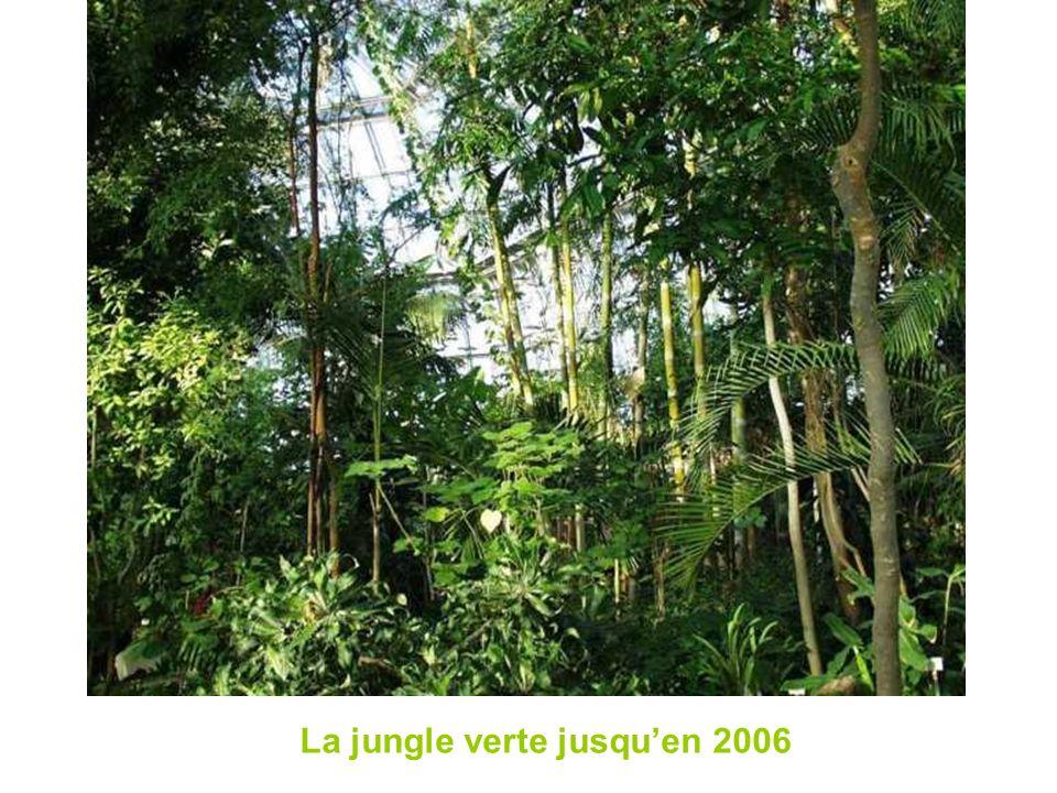 La jungle verte jusquen 2006