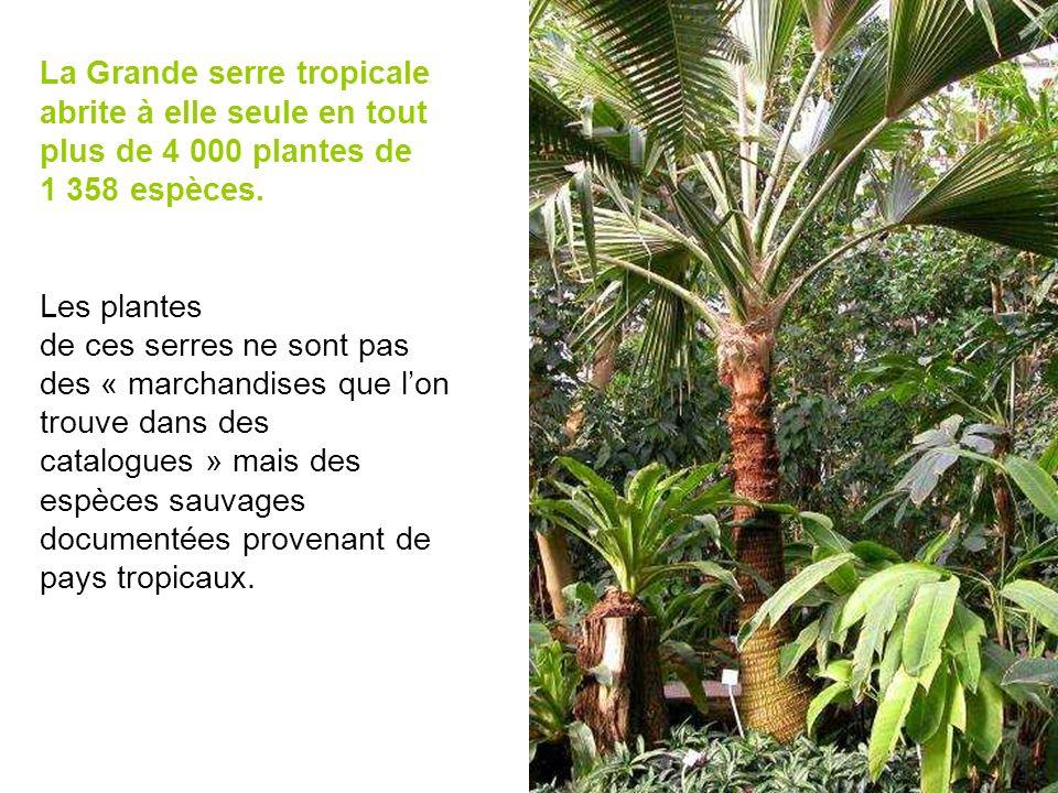 La Grande serre tropicale abrite à elle seule en tout plus de 4 000 plantes de 1 358 espèces. Les plantes de ces serres ne sont pas des « marchandises