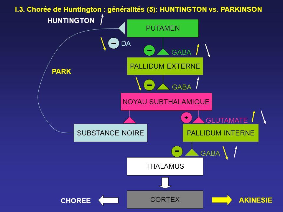 PUTAMEN PALLIDUM EXTERNE NOYAU SUBTHALAMIQUE SUBSTANCE NOIREPALLIDUM INTERNE THALAMUS CORTEX DA GABA GLUTAMATE + PARK AKINESIE HUNTINGTON CHOREE I.3.